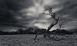 Profilový obrázek At The Tree