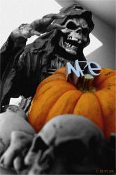 Profilový obrázek The NFe