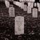 Profilový obrázek Graves In Line