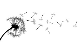 Profilový obrázek Flying Seeds