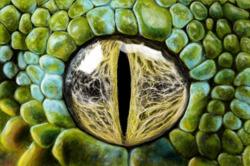 Profilový obrázek The Reptilians