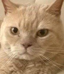 Profilový obrázek Pacholek