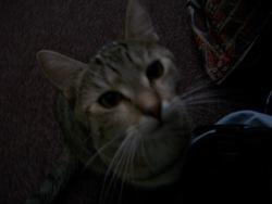 Profilový obrázek Taky Taky