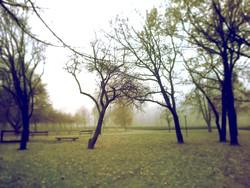 Profilový obrázek strom noir