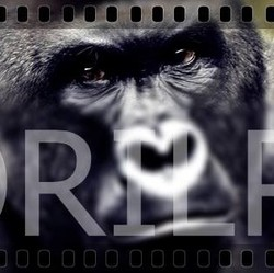 Profilový obrázek Gorilpop