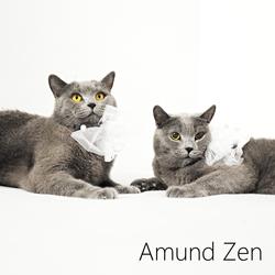 Profilový obrázek Amund Zen