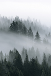 Profilový obrázek Trollfjell