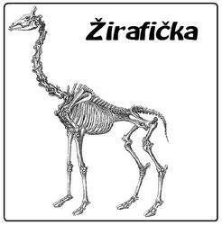 Profilový obrázek Žirafička