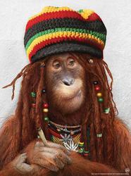 Profilový obrázek Junky Monkey
