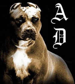 Profilový obrázek Angry Dog