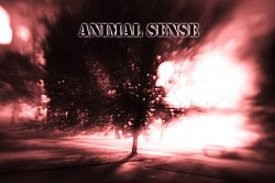 Profilový obrázek Animal Sense
