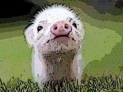 Profilový obrázek LaFuoc