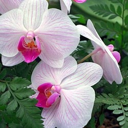 Profilový obrázek Bílá orchidej
