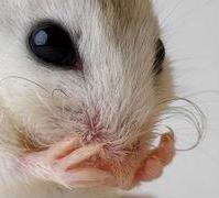 Profilový obrázek Drsná myš