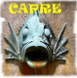 Profilový obrázek Capre