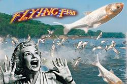 Profilový obrázek Flying Fish