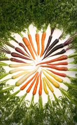 Profilový obrázek Carrots