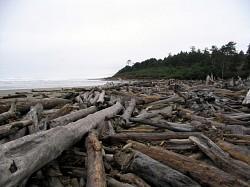 Profilový obrázek Driftwood
