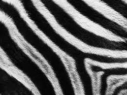 Profilový obrázek When Zebras Eat Crocodiles