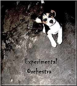 Profilový obrázek Experimental Orchestra