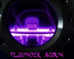 Profilový obrázek Flounder acorn