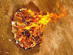 Profilový obrázek Flaming Wheel