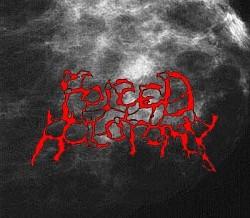 Profilový obrázek Forced Holotomy