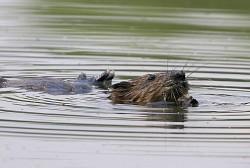 Profilový obrázek Hoši od bobří řeky