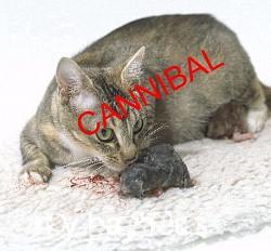Profilový obrázek Kitten Cannibal