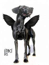 Profilový obrázek Lítací Pes