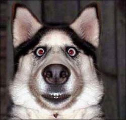 Profilový obrázek Mc Vlk od klad