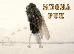 Profilový obrázek Mucha Puk