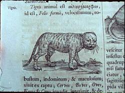 Profilový obrázek Paumanok