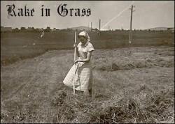 Profilový obrázek Rake in Grass