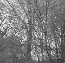 Profilový obrázek Octagonia