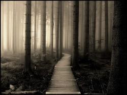 Profilový obrázek Silent Hill