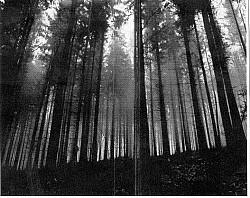 Profilový obrázek Slavonian Frost
