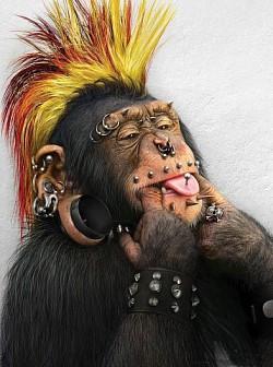Profilový obrázek ŠTIPLAVÝ ŠIMPANZ