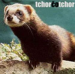 Profilový obrázek Tchor čo Tchor