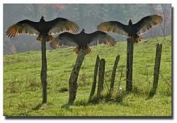 Profilový obrázek The Turkey Buzzards