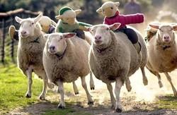 Profilový obrázek Závodní ovce
