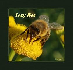 Profilový obrázek Líná včela