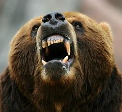 Profilový obrázek medvjed