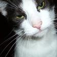 Profilový obrázek Mamuschka