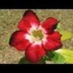 Profilový obrázek forresta3743