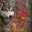 Profilový obrázek Severin Vlk