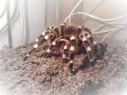 Profilový obrázek Pavoukoid