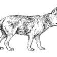 Profilový obrázek wolf93