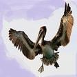 Profilový obrázek pelikanata