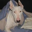 Profilový obrázek santie
